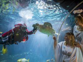 Schildkröte beim Füttern (Foto: Sea Life Speyer/Tobias Schwerdt)