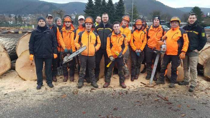 Das Team der Forstbetriebsleitung Schwarzach bei der Vorbereitung zur Holzaufnahme für die anstehende Nadelwertholzsubmission Mitte Februar. - Fotos: Landratsamt