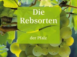 Die neue Broschüre (Foto: Pfalzwein e.V.)