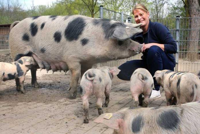 Rudolf Uhrig Sandy Gass, stellvertretende Tiergartenleiterin, mit den Bunten Bentheimer Schweinen auf dem Bauernhof des Tiergartens