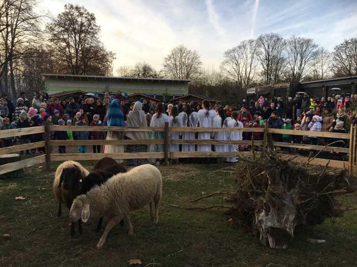 Freizeitbetriebe Worms GmbH Erfolgreiche Premiere: Weihnachtszauber mit Krippenspiel im Tiergarten