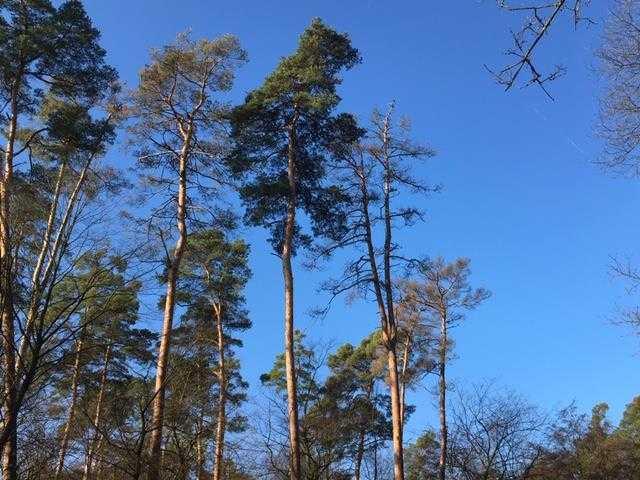 Durch die Trockenheit 2018 stark geschädigter Kiefernwald - Quelle: Landratsamt Karlsruhe