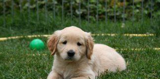 Symbolbild Hund Welpe (Foto: Pixabay)
