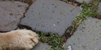 Symbolbild Hundepfote (Foto: Holger Knecht)