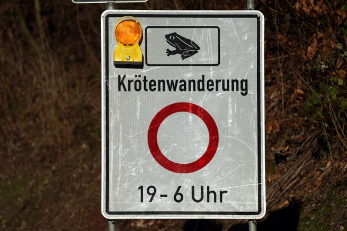 Krötenwanderung K16 (Foto: Holger Knecht)