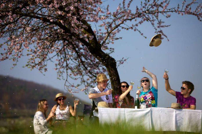 Picknick in der Mandelblüte (Fotoquelle: Tourist-Information Deidesheim)