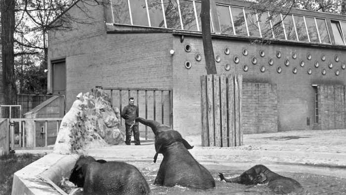 Blick zurück: Die Karlsruher Elefantengruppe besteht ab Herbst 1958 aus Trio Rani, Shanti und Nepal. Später kommt noch Trulli hinzu. Diese Gruppe hat über vier Jahrzehnte Bestand. Foto: Archiv