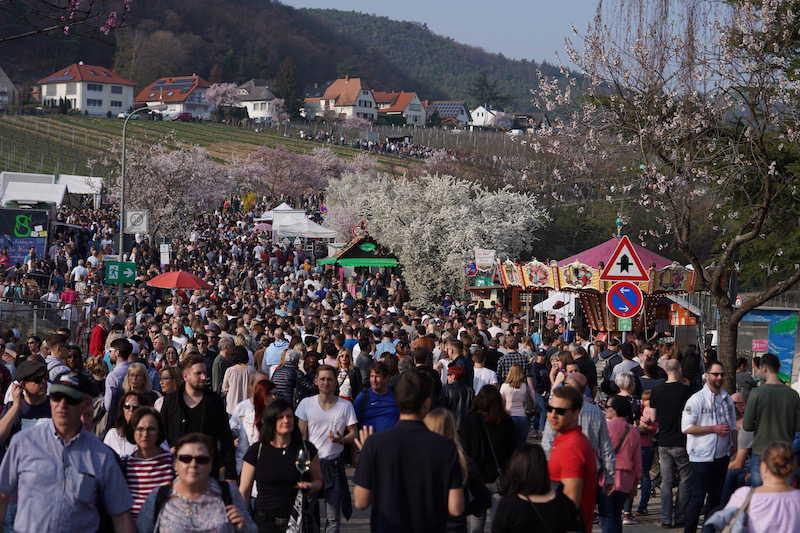 Gimmeldingen Mandelblütenfest 2019 (Foto: Holger Knecht)