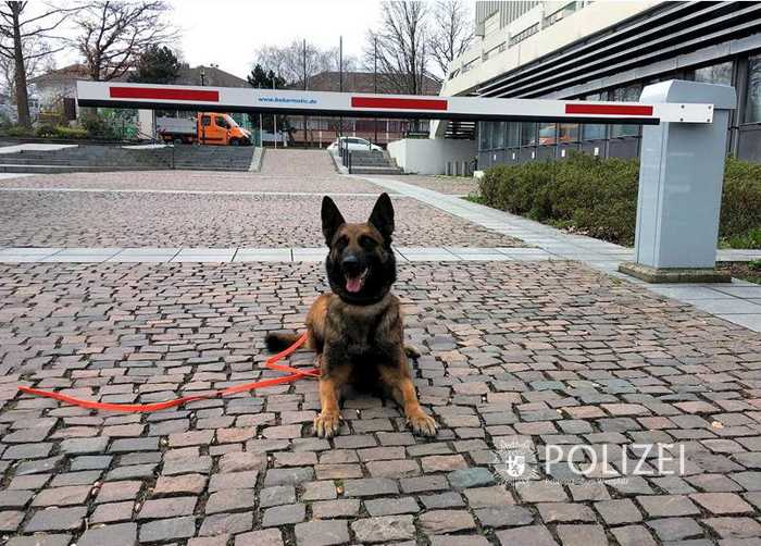 Sprenstoffspürhund, Bombendrohung © Polizeipräsidium Westpfalz