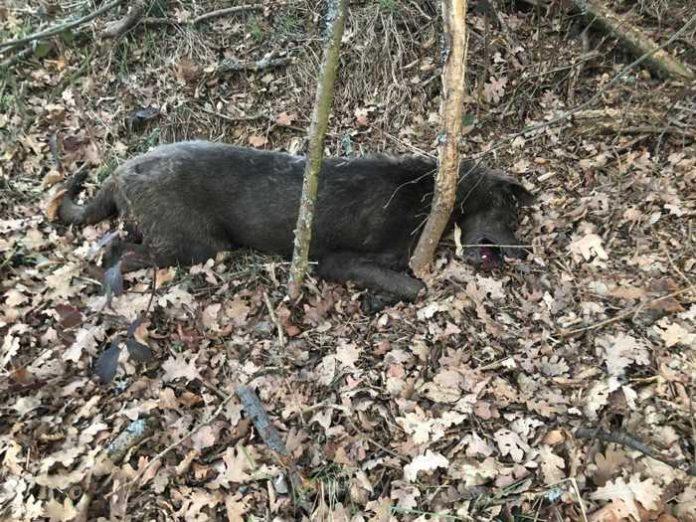 Mittlerweile vier tote Hunde gefunden