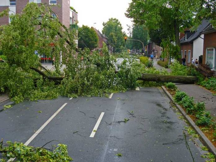 Symbolbild, Sturm, Baum, Sturmschaden, Straße © Jan Mallander on Pixabay