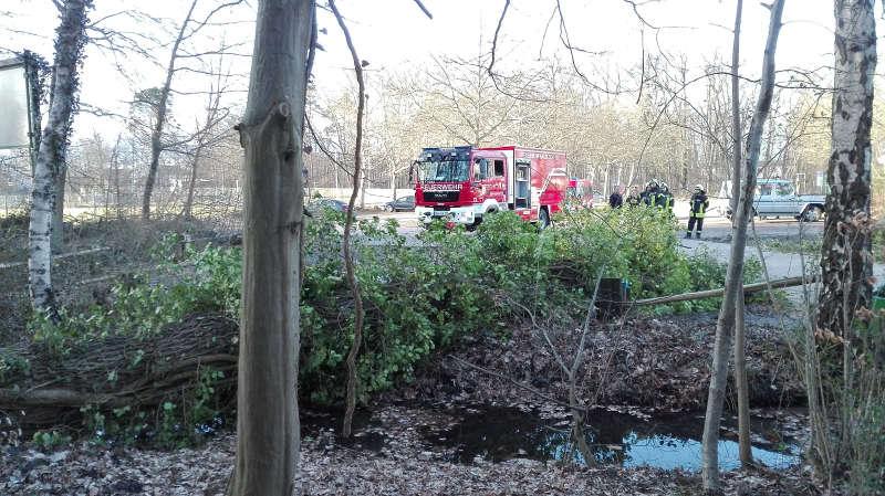 Umgestürzte Bäume (Foto: Feuerwehr Haßloch)
