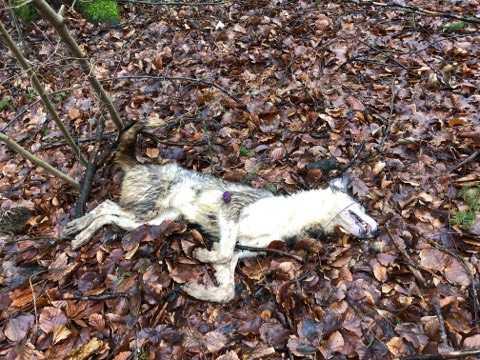 weiterer aufgefundener Hund