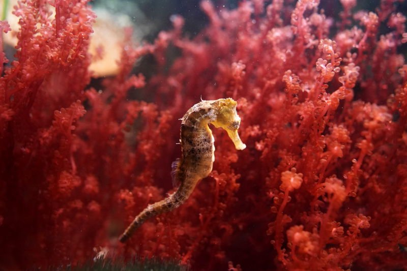 SEA LIFE SPEYER (Foto: Holger Knecht)