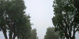 Symbolbild, Nebel, Allee, Bäume (pxhere)
