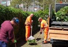 Pflegemaßnahmen um Rathaus_