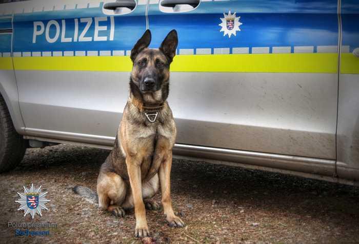 Symbolbild, Polizei, Südhessen, Hund, Diensthund © Polizei Südhessen