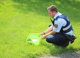 Die geretteten Entenküken wurden von Polizeikommissar Tobias Bill in einem mit Wasser angefüllten Behältnis zum Bachlauf gebracht.