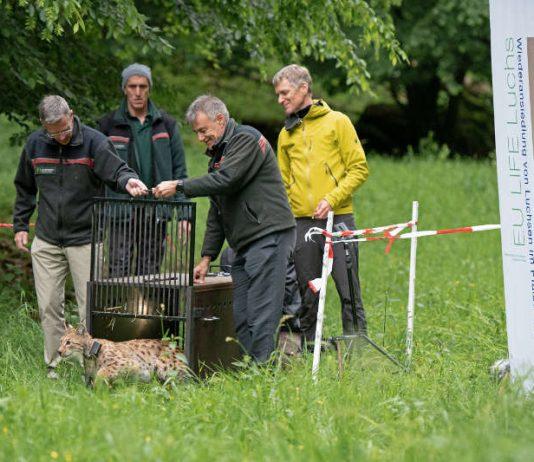 Herr Frank Ridderbusch und Herr Wolfgang Wambsganß von der Zentrale der Forstverwaltung entlassen Braňo in seine neue Heimat. (Foto: Annina Pruessing / SNU)