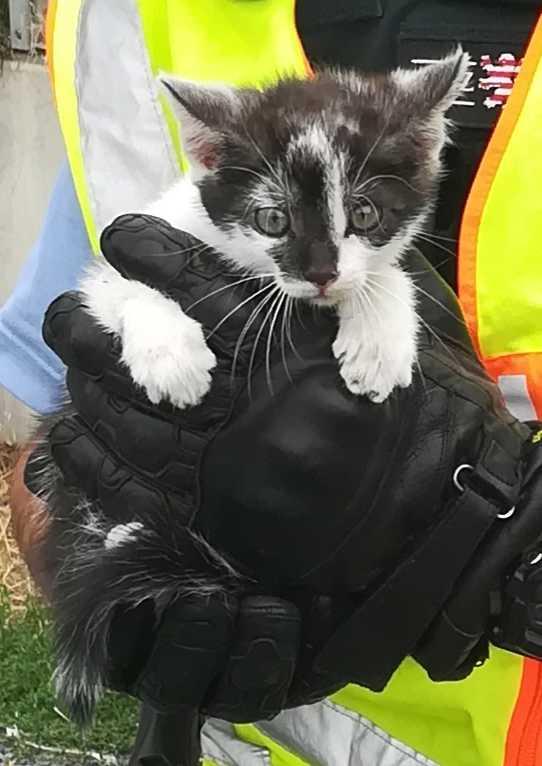 A5: Kleines Kätzchen gerettet