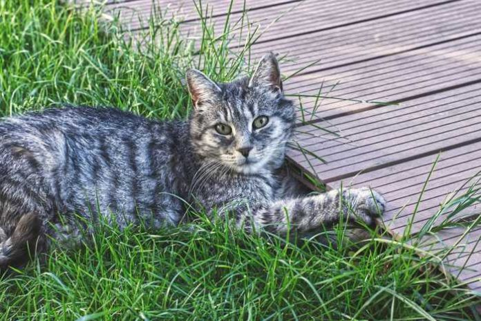 Symbolbild, Katze, Grau, getigert, Draussen © Alexas_Fotos on Pixabay