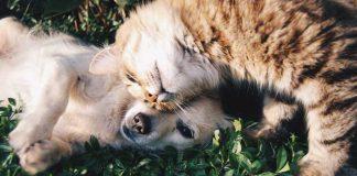Tierschutz geht uns Alle an - Quelle: Pixabay