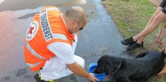 Auf den Hund gekommen (Foto: Polizei RLP)