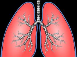 Symbolbild Lunge (Quelle: Pixabay OpenClipart-Vectors)