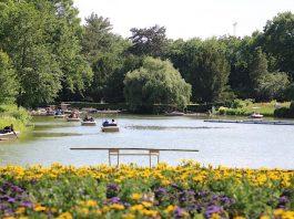 Noch bis zum 6. Oktober sind Fahrten mit den Gondolettas über Stadtgarten- und Schwanensee möglich. (Foto: Timo Deible/Zoo Karlsruhe)
