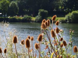 Symbolbild, Natur, Neckarufer, Sommer, Heidelberg © on Pixabay