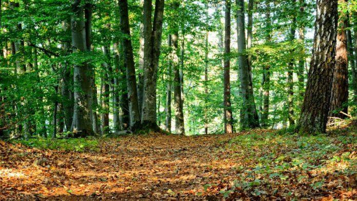Symbolbild Wald (Foto: Pixabay/Manfred Antranias Zimmer)
