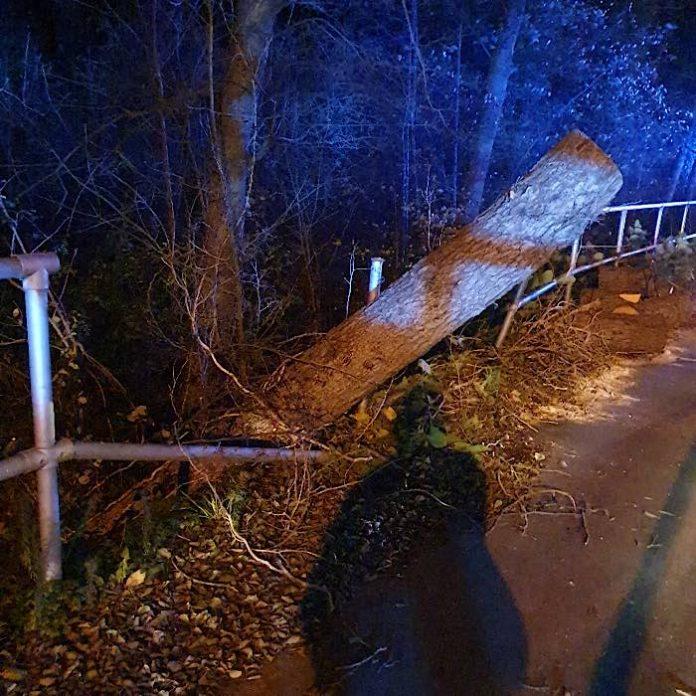 Der Baum wurde von der Feuerwehr entfernt (Foto: Presseteam der Feuerwehr VG Lambrecht)