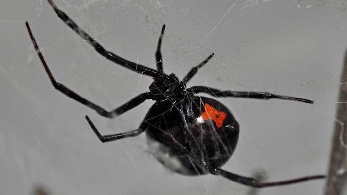 Bad Dürkheim: Öffentliche Spinnenfütterung Am Pfalzmuseum