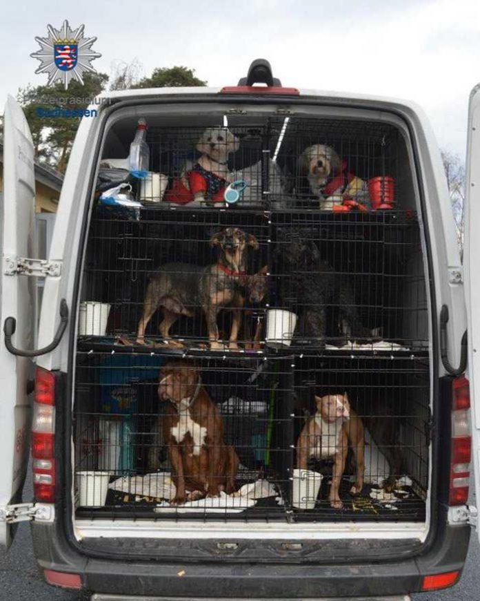 Hunde in dem von der Polizei gestoppten Transporter