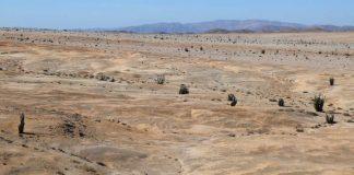 Neue_Lebensgemeinschaft_in_der_Atacama-Wueste
