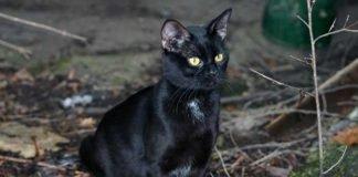 Symbolbild, Tiere, Katze, schwarz, sitzt, aufmerksam, draussen (pxhere)