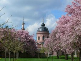 Zierkirschen im Obstgarten von Schloss Schwetzingen (Foto: Petra Pechacek/SSG Pressebild)