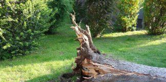Symbolbild umgestürzter Baum (Foto: Pixabay/Rupert Kittinger-Sereinig)