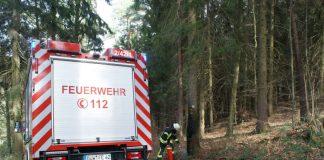 Ein Baum brannte (Foto: Presseteam der Feuerwehr VG Lambrecht)