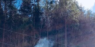 Durch die Stromleitung geriet ein Baum in Brand (Foto: Presseteam der Feuerwehr VG Lambrecht)