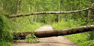 Symbolbild, Sturm, Baum, Schaden, Wald, Weg, Straße © on pixabay