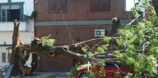 Symbolbild, Sturm, Schaden, Baum, rotes Auto, Autodach (pxhere)
