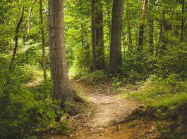 Symbolbild Wald (Foto: Pixabay/Pexels)