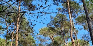 Symbolbild Wald (Foto: Holger Knecht)
