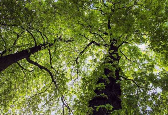 Symbolbild, Baum, Wald, Natur, Blätterdach © MoiraKaram on Pixabay