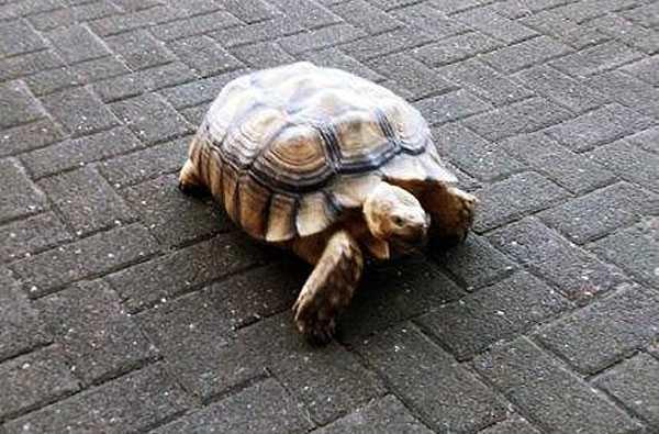 schildkröte Schildi
