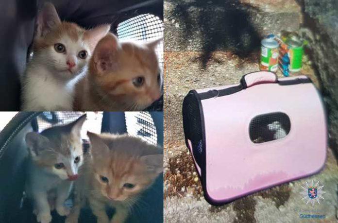 Ausgesetzte Katzenbabies gefunden © Polizeipräsidium Südhessen