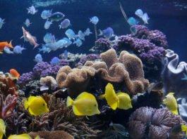 Tropische Korallenwelt im SEA LIFE (Foto: SEA LIFE/Sebastian Reimold)