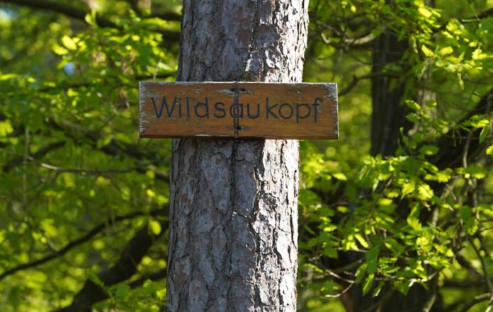 Symbolbild Wildsaukopf in Lambrecht (Foto: Holger Knecht)