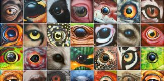 """Sonderausstellung """"365 Augen – Blicke des Lebens"""" (Foto: Meune Lehmann)"""